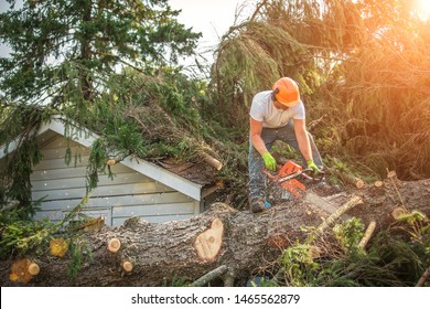Lumberjack cutting tree. man cutting trees using an electrical chainsaw. Lumberjack. cutting tree. electrical chainsaw. Home insurance. insurance storm.Storm damage.Roof damage. tree down.