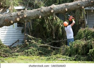 Lumberjack cutting tree. man cutting trees using an electrical chainsaw.  Lumberjack. cutting tree. electrical chainsaw. Home insurance. insurance storm.Storm damage.Roof damage. tree down.