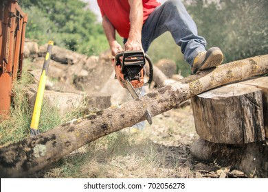 Lumberjack cutting a trunk