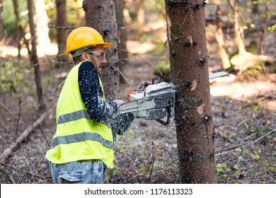 Lumberjack wearing safety equipment and working in forest with chainsaw