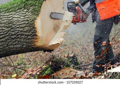 lumberjack at work