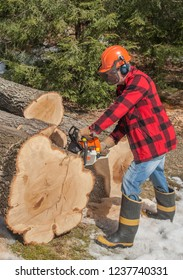 Lumberjack worker cutting firewood logs in forest with a professional chainsaw