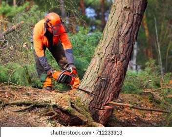 The Lumberjack working in a forest. Harvest of timber. Firewood as a renewable energy source. Agriculture and forestry theme. People at work.