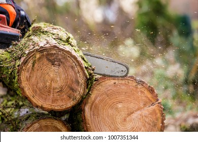a lumberjack works with a chainsaw tree trunks