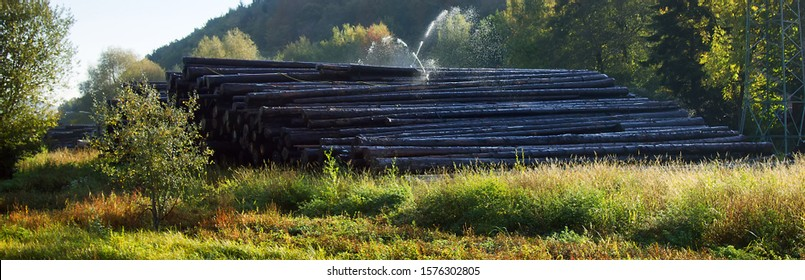 Lumberyard, depot for primary conversion. Water pile of logs. Sprinkler irrigation as way of preserving wood - creating microclimate and oxygen-free environment for fungi and forest pests. France