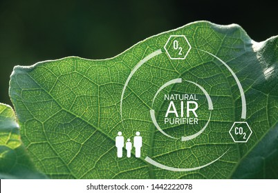 Luminous leaf with graphic Natural Air Purifier and symbol of Oxygen, Human and Carbon dioxide which means tree is the best air purifier and most of all, it's free.