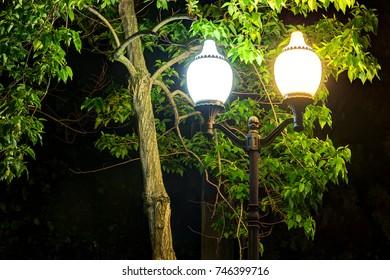 Luminous street light on the background of tree foliage near the trunk at night