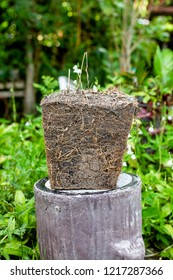 The Lumps of soil used to be in pots shape in the trapezoid. Show the soil layer of the roots of the tree.