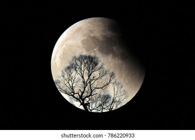 Lunar eclipse and tree silhouette.