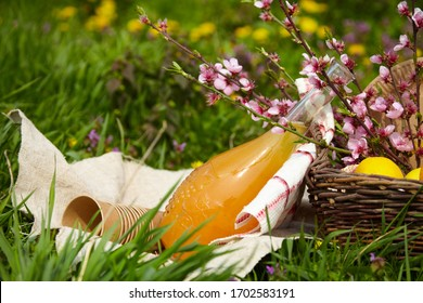 Lunch in the park on the green grass. Summer sunny day and picnic basket. With paper utensils. Picnic concept without plastic.