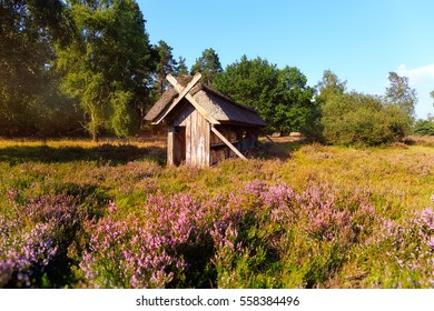 Luneburg Heath is a large area of heath, geest and woodland in the northeastern part of the state of Lower Saxony in northern Germany.
