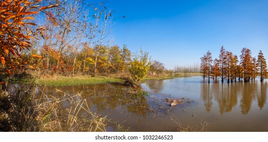 Luoma District, Nanjing City, Jiangsu Province, Ma Maling national wetlands natural landscape