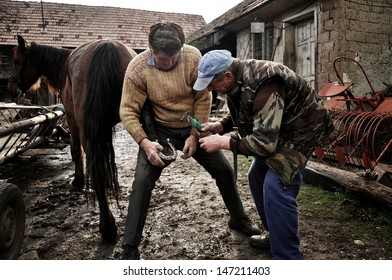 LUPENI - APRIL19: An unidentified blacksmith, farrier shoeing a horse. Such type of smithery techniques are very rare in Romania. On April  19, 2012 in Lupeni, Romania