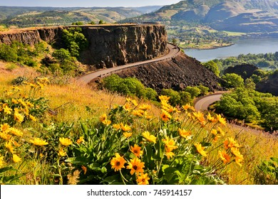 Lupine and balsamroot flowers and the Columbia River at the Tom McCall Preserve in the Rowena hills in the Columbia River Gorge National Scenic Area., Oregon.