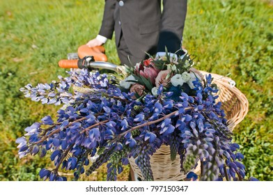 lupine flowers in a bicycle basket