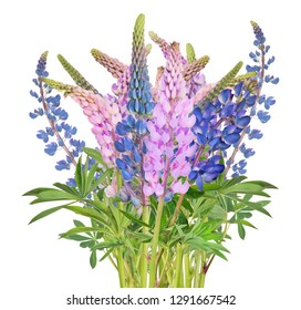 lupine flowers bunch isolated on white background