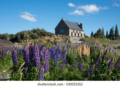 Lupine flowers and church of good sheperd at Tekapo lake during springtime