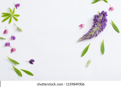 lupine flowers on white background