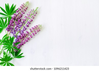 Lupine summer flowers on the white wooden background. Selective focus at the lupine flowers