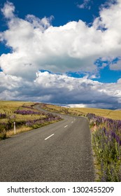 Lupins blossoming along a road near Lake Tekapo, in New Zealand