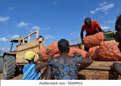 LUSAKA,ZAMBIA – DECEMBER 3:group of farmers gathered potatoes and load the truck for export to Zambia and Malawi, 300 farmers working in this field, on December 3,2011 in Lusaka,Zambia