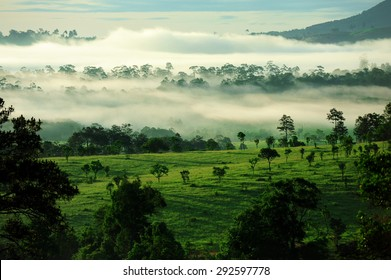 With luscious green forests and white fog on Thung Namg Pha Ya (Thung Salaeng Luang National Park), Thailand