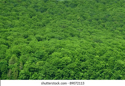 luscious rain-forest background
