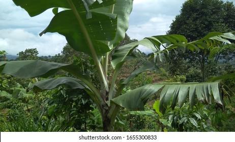 Imagens Fotos Stock E Imagens Vetoriais De Floresta Desenho