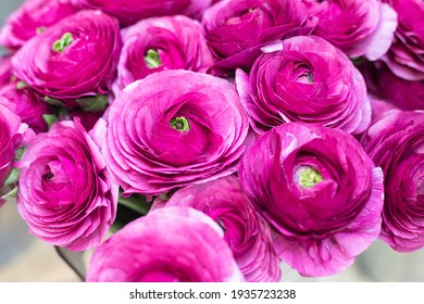 A lush bouquet of ranunculus flowers of purple color in the store floral. Obi-shaped roses