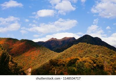 Lush colourful autumn forest of Taebaek Mountain range, Gangwon-do, South Korea