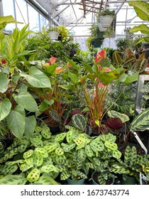A lush display of houseplants, growing in a greenhouse in New England.