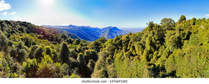 Lush evergreen tree tops and canopy in Dorrigo National park of ancient Gondwana continent rainforest lit by bright sun under blue sky in Australia.