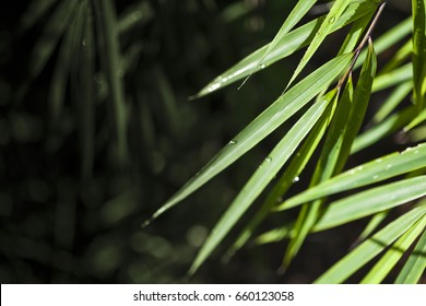 Lush, exotic green bamboo jungle nature background