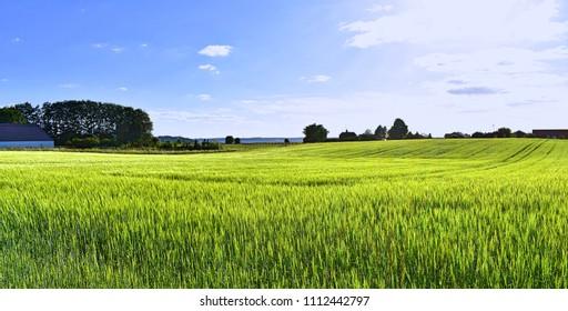 Lush fields of Denmark