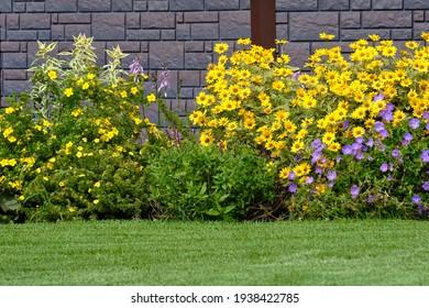 Lush flower garden. Ornamental plants in the flowerbed. Flowers on the grass.