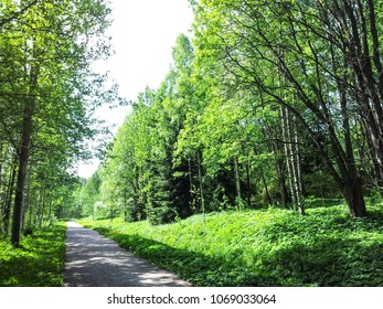 Lush foliage in forest walkway in fresh green colors at springtime