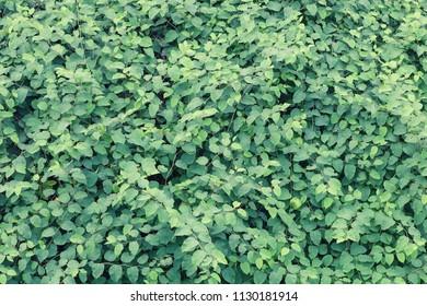 Lush foliage green background