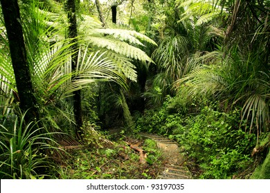 Lush foliage in New Zealand forest