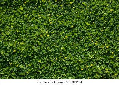 lush foliage,tiny