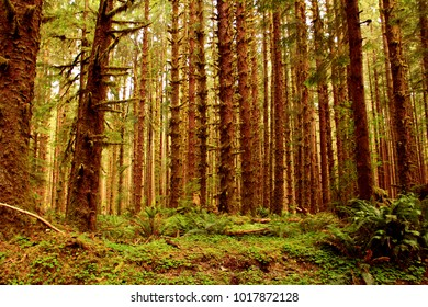 Lush forest in the Pacific Northwest