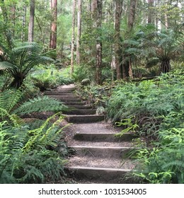 Lush Forest Pathway Steps in Otway National Park, Australia