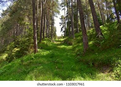 Lush forest scene