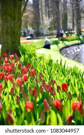 A lush garden looking through a grouping of Ted tulips out to a groundskeeper tending to the grass.