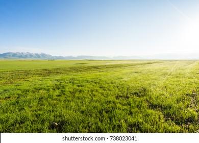 Lush grasslands
