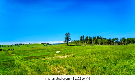 Lush Grasslands along Highway 5A, the Kamloops-Princeton Highway, between the towns of Merritt and Princeton in British Columbia, Canada