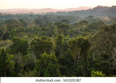 The lush green canopy of the Amazon rainforest seen from an observation tower.