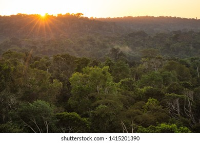 The lush green canopy of the Amazon rainforest, at sunrise.