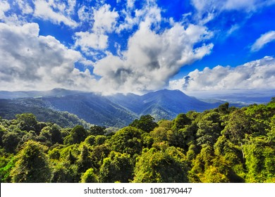Lush green canopy of gondwana rainforest in DOrrigo national park as seen from main lookout towards distant mountain under blue bright sky.