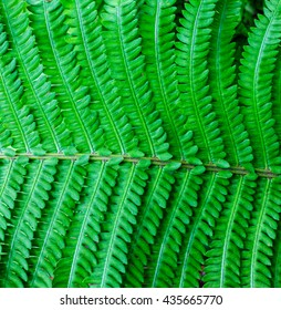 Lush green fern detail.