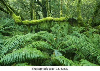 Lush green ferns and mossy tree branches on along the Milford Track, Fiordland, New Zealand